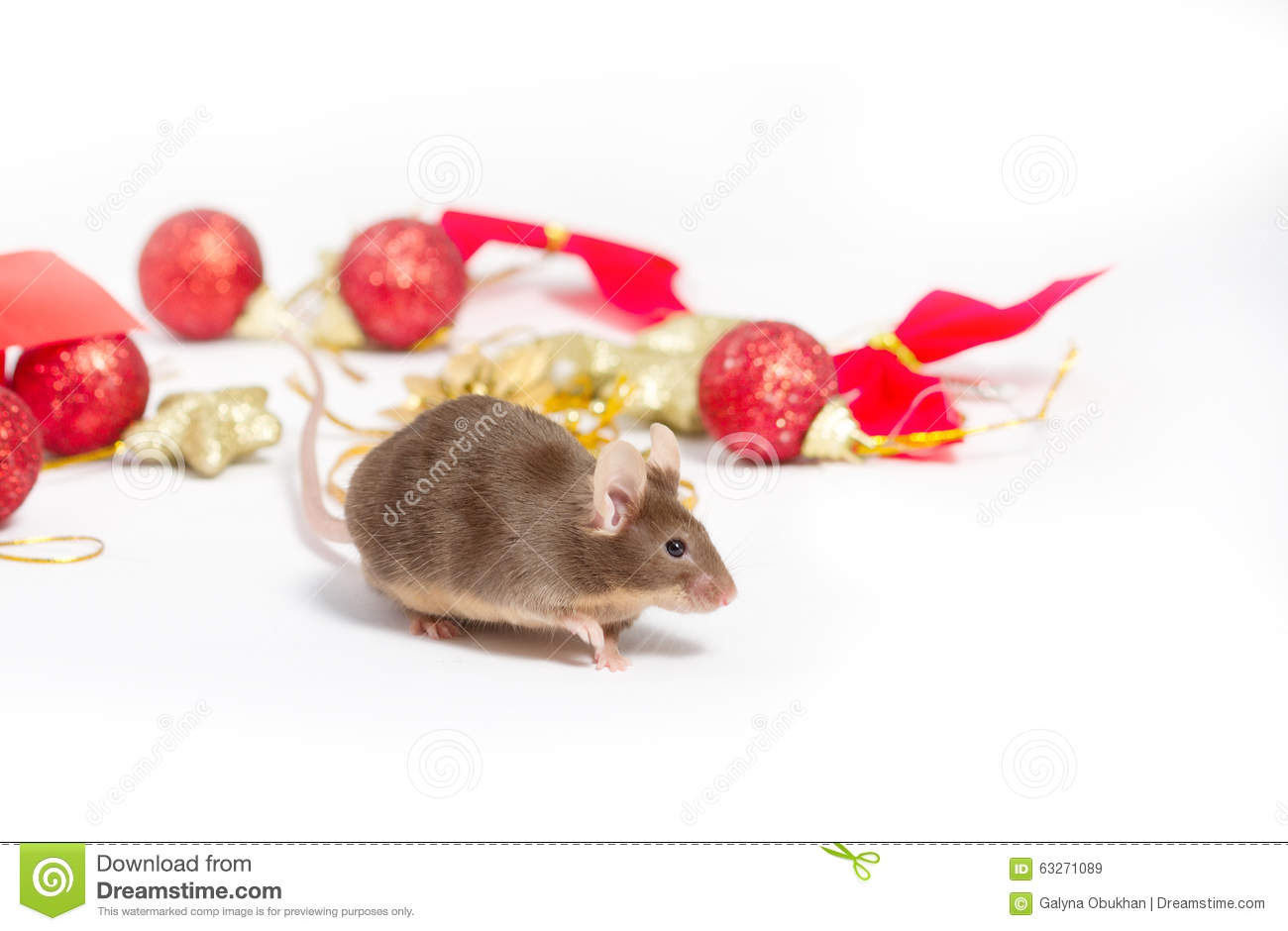 download sweet brown mouse sitting among red and gold christmas decorations stock image image - Christmas Mice Decorations