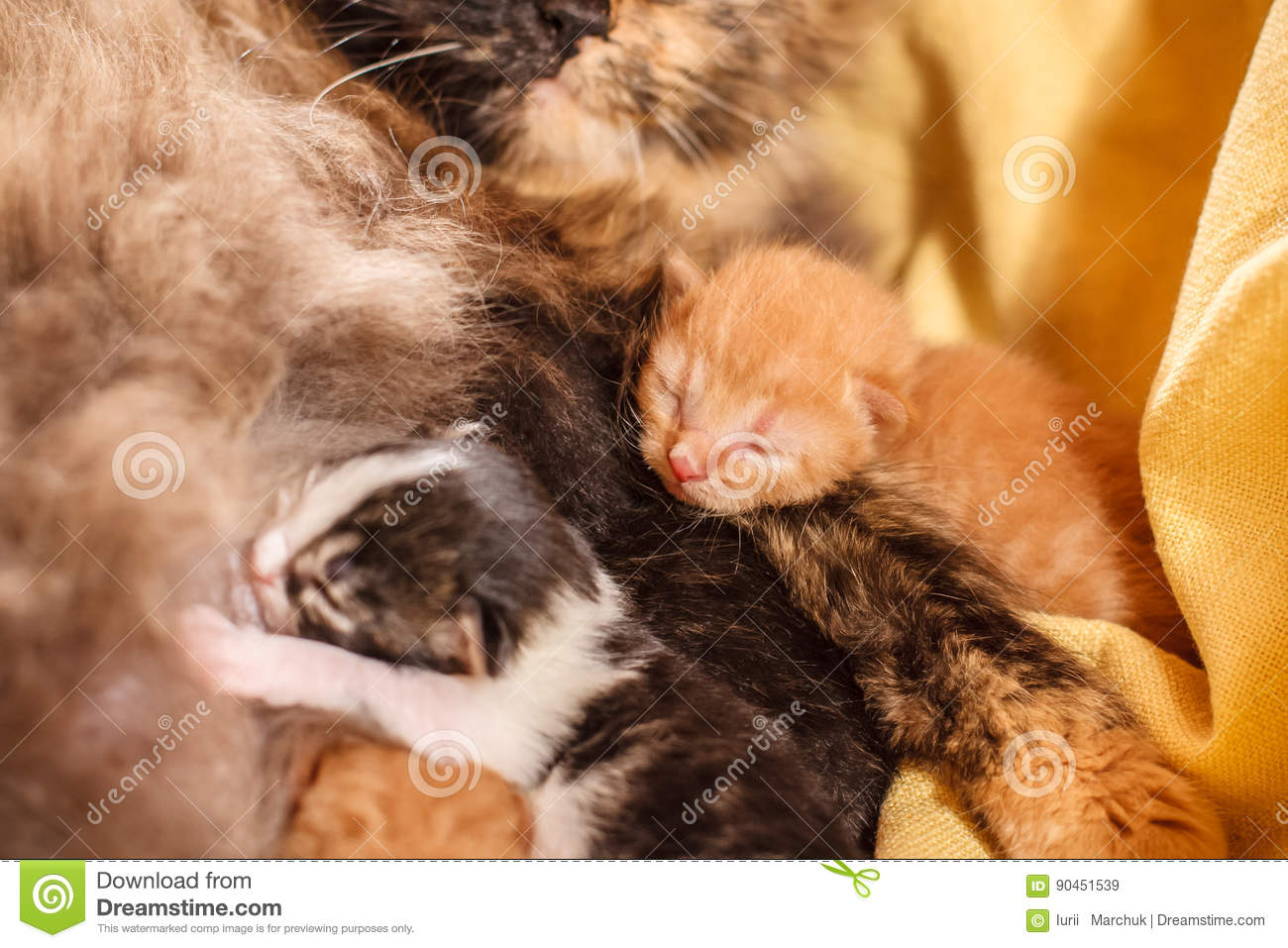 Sweet Cat Family Just New Born Kittens With A Mother Cat Red Black And White Kittens Stock Image Image Of Animal Claw 90451539