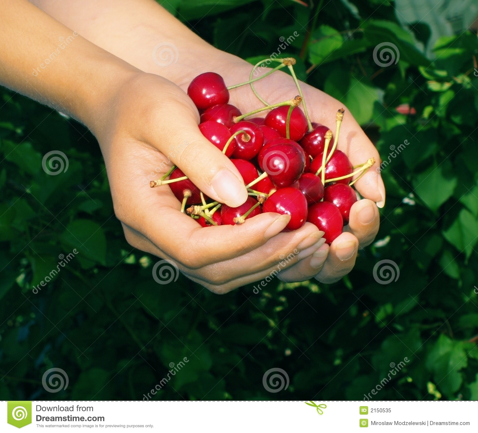 Sweet Cherry Fruit Royalty Free Stock Photo - Image: 2150535