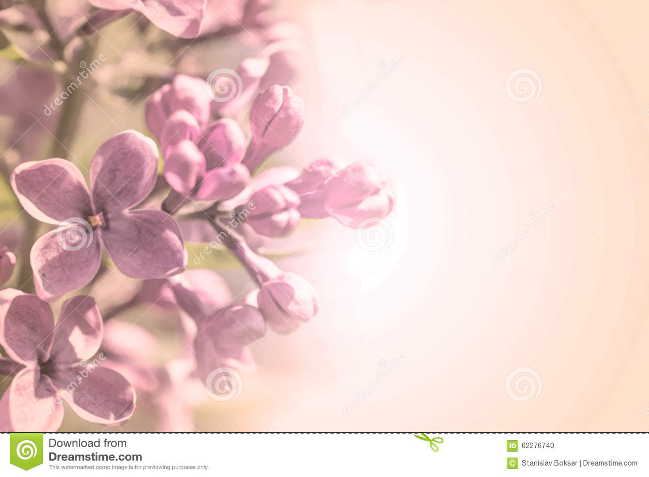 Sweet Color Petal Branch With Spring Rose Lilac Flowers On Pink