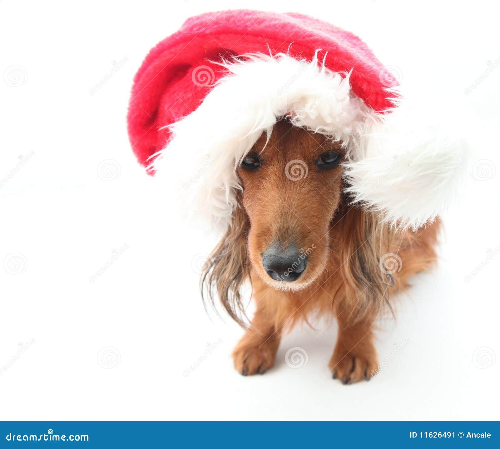Santa Hat With Dog Ears