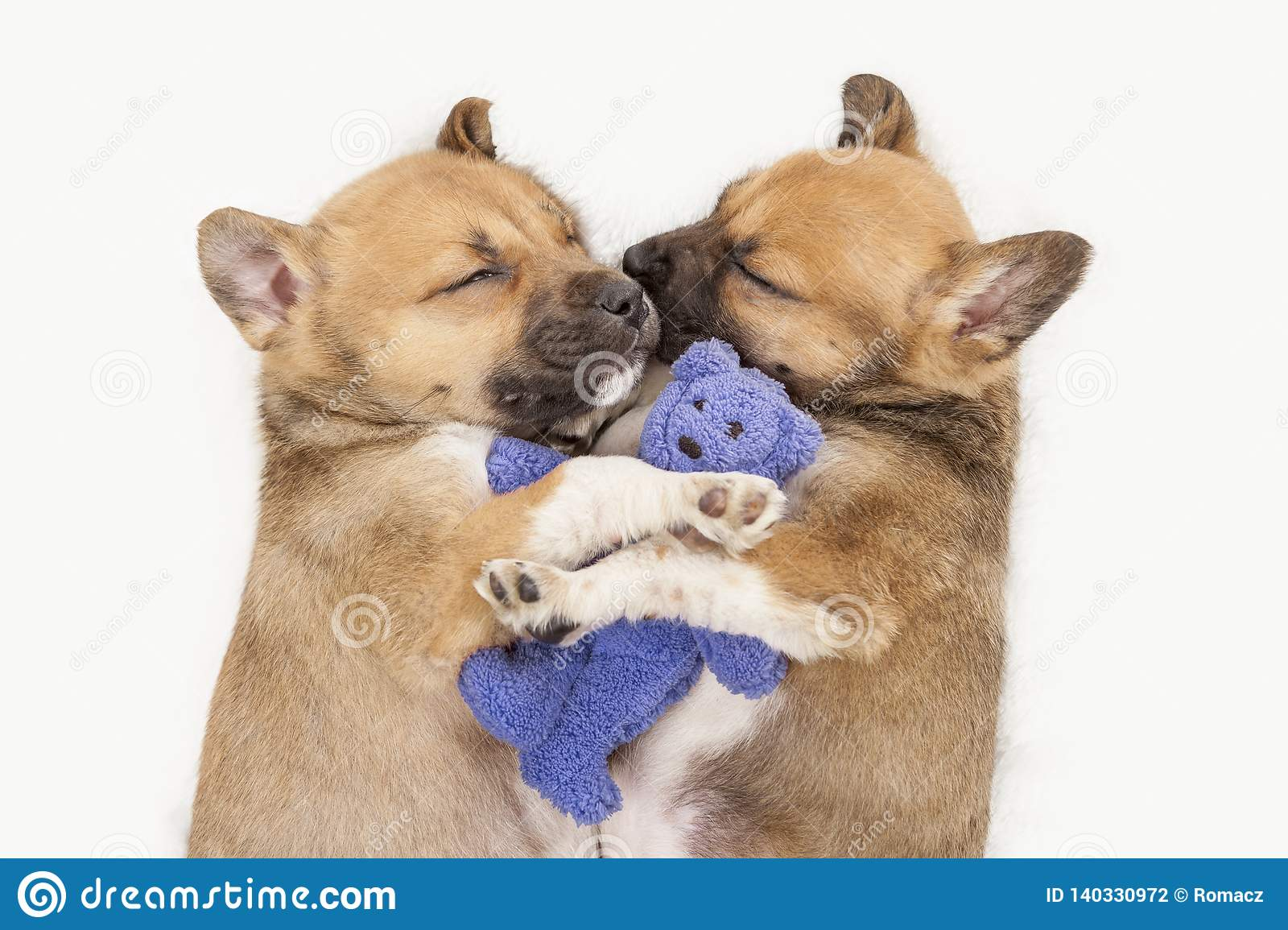 Two Little Sleeping Puppies Holding Teddy Bear On White ...