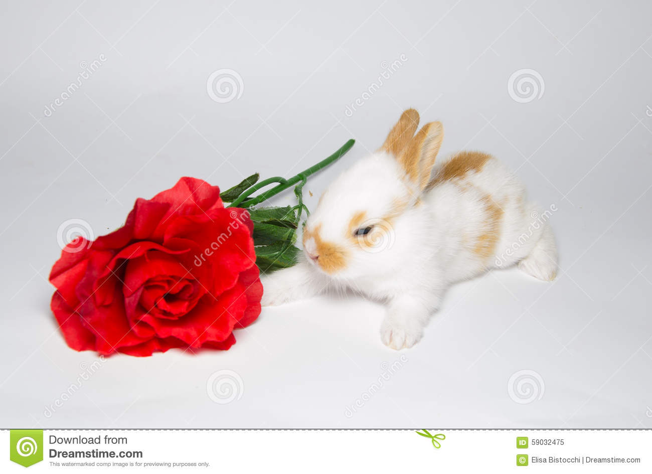 Sweet little bunny with rose