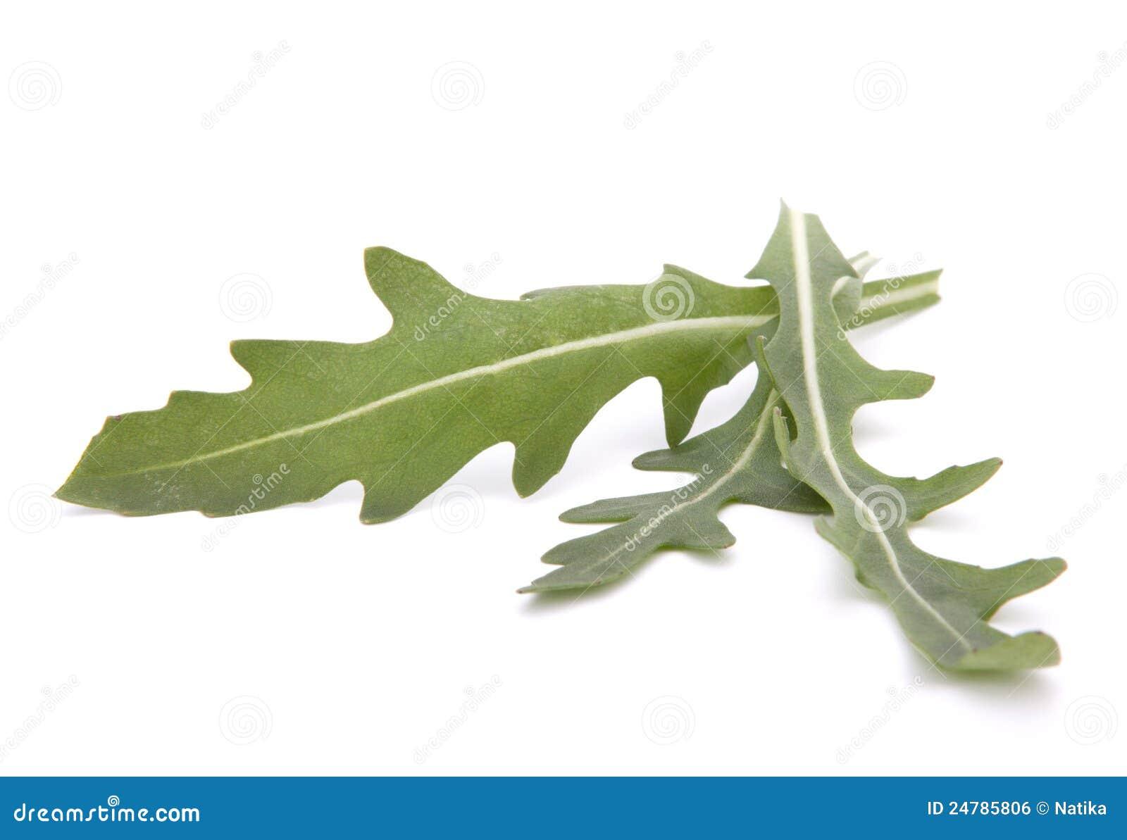 sweet rucola salad or rocket lettuce leaves royalty free