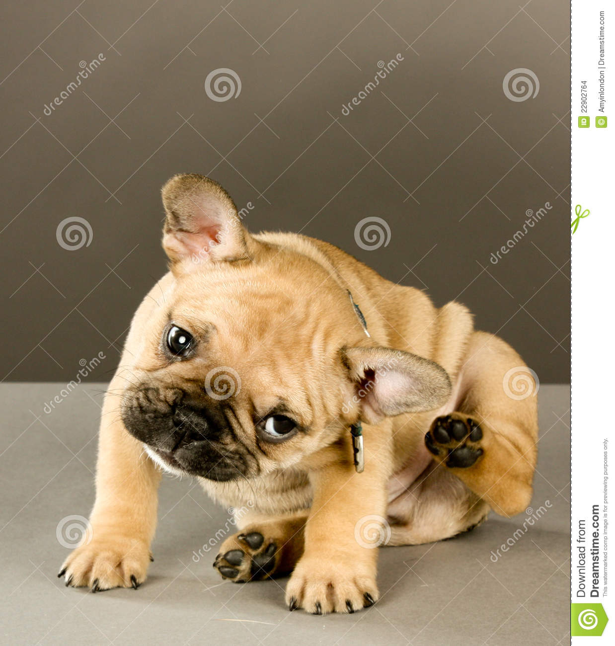 3 Ways to Care for an 8 Week Old Puppy - wikiHow