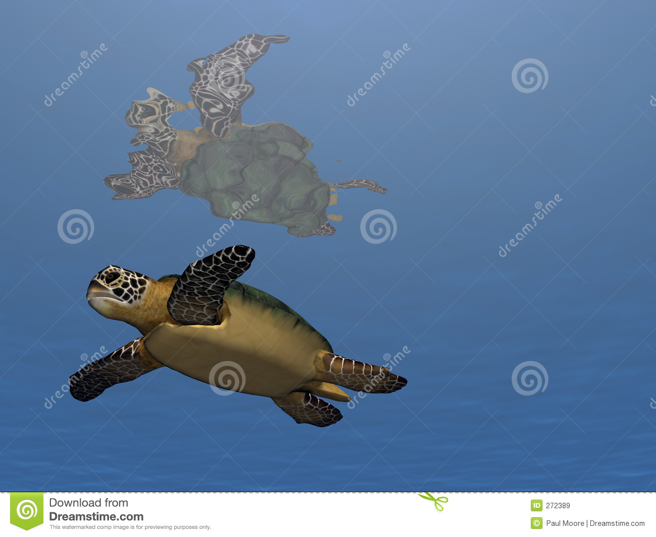 Swim Turtle Swim Royalty Free Stock Images - Image: 272389