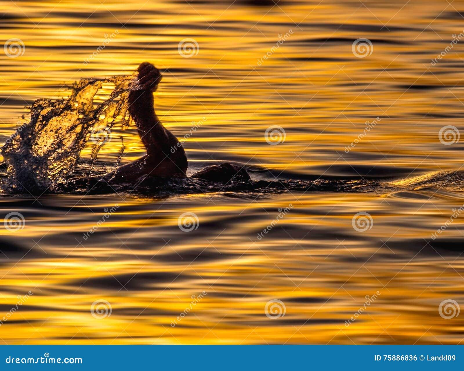 Swimmer in sunset