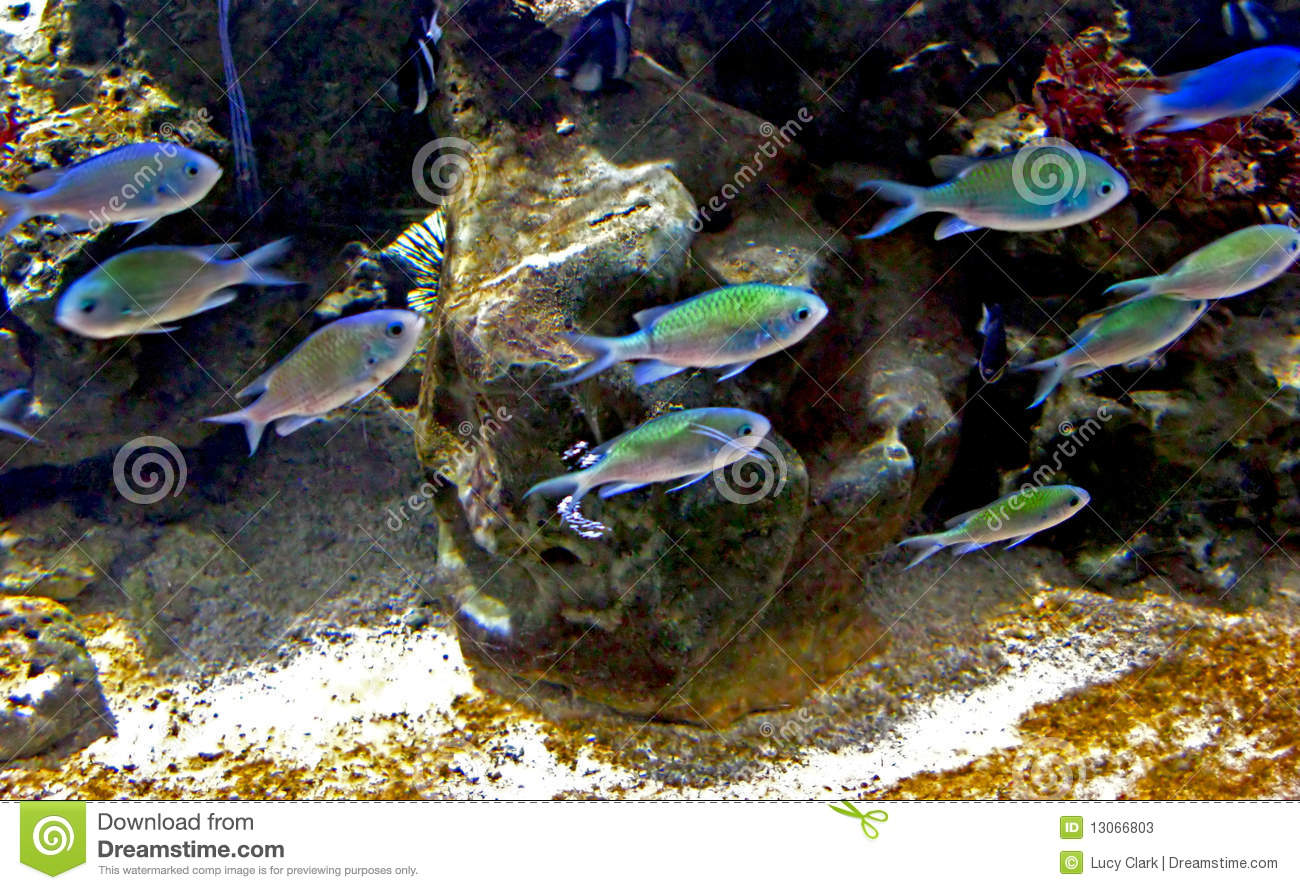 Swimming fish stock image image of aquarium animals for Dream of fish swimming