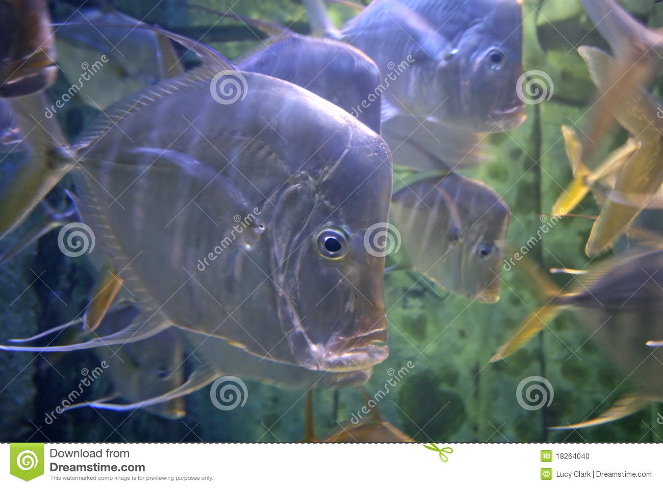Swimming fish stock photo image 18264040 for Dream of fish swimming