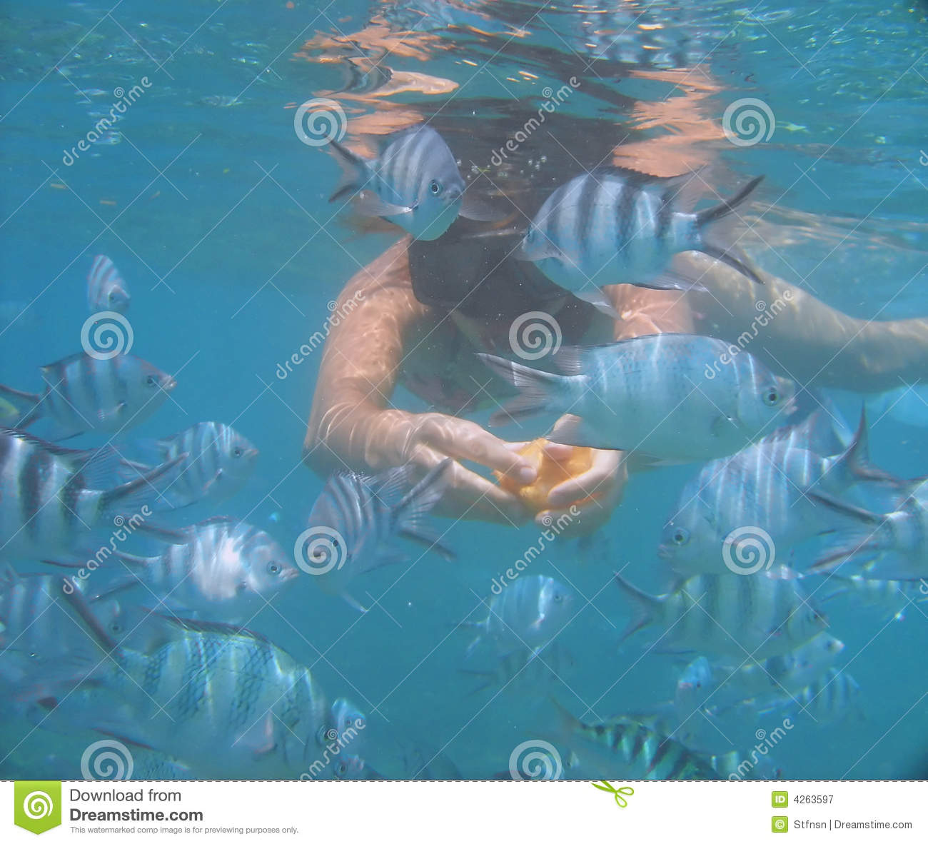 Swimming with fish in the ocean stock image image 4263597 for Dream of fish swimming