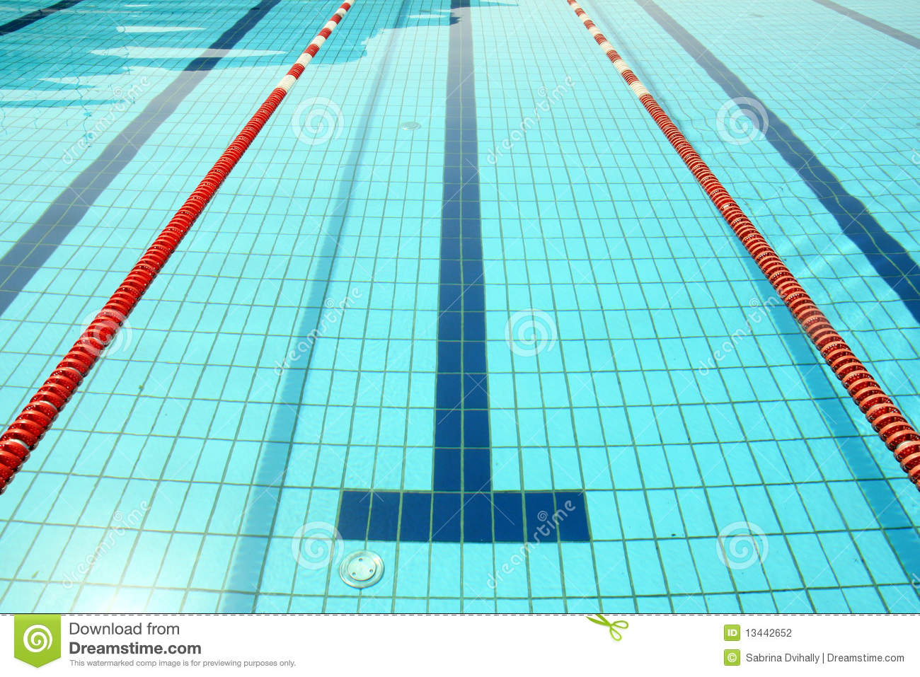 Swimming Pool Line Stock Photo Image Of Cool Competition 13442652