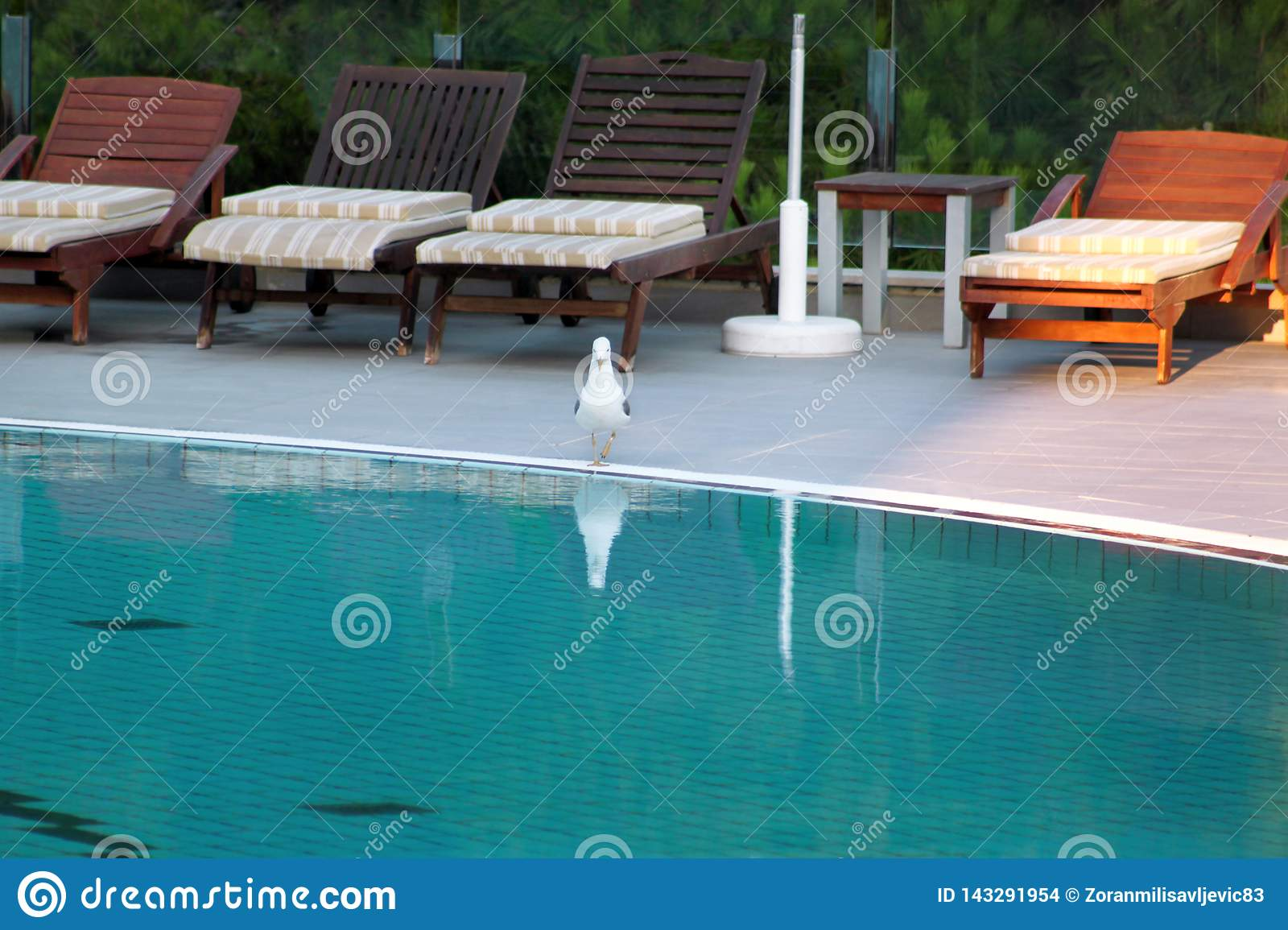 Swimming pool of luxury holiday hotel, amazing view and scene of seagull enjoying alone. Relax near pool with handrail, sunbeds.