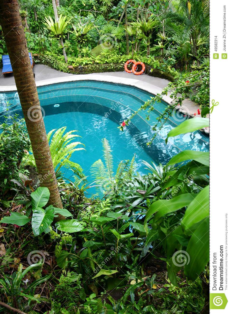Swimming pool natural plant screen landscaping stock Best plants for swimming pool landscaping