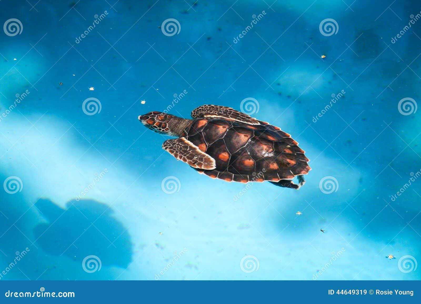 Swimming Sea Turtle Stock Photo Image 44649319