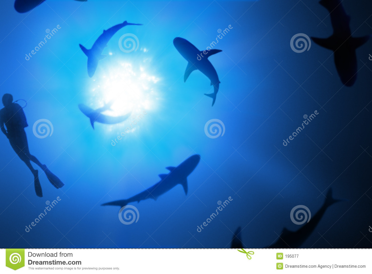 Swimming With Sharks Royalty Free Stock Photography - Image: 195077