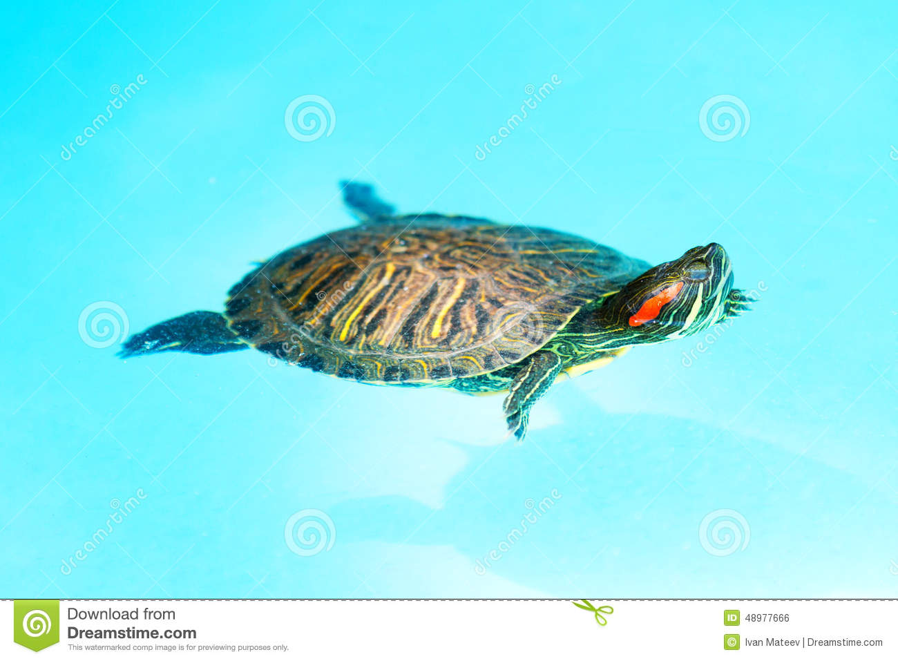 Swimming Turtle Stock Photo - Image: 48977666