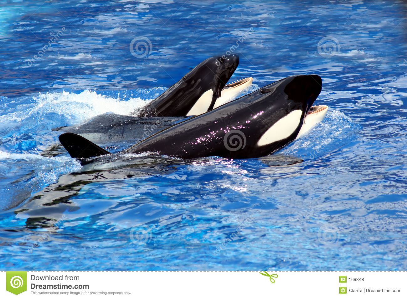 Swimming whales