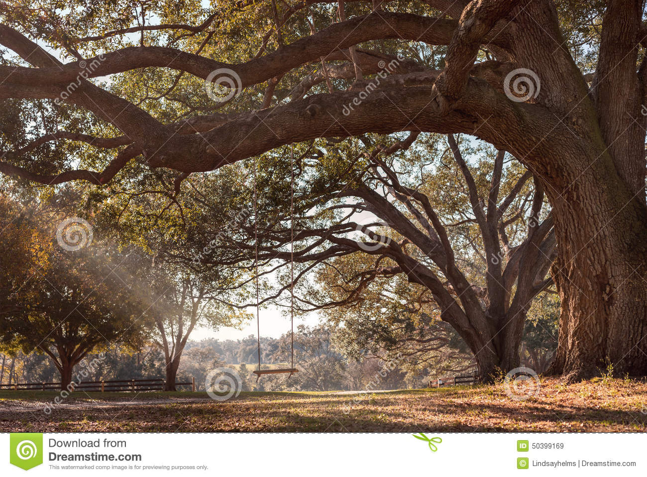 Swing hanging from tree branch stock image image 50399169 - Rustic wood fences a pastoral atmosphere ...