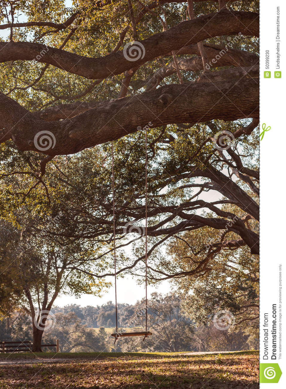 Swing hanging from tree branch stock photo image 50399230 - Rustic wood fences a pastoral atmosphere ...
