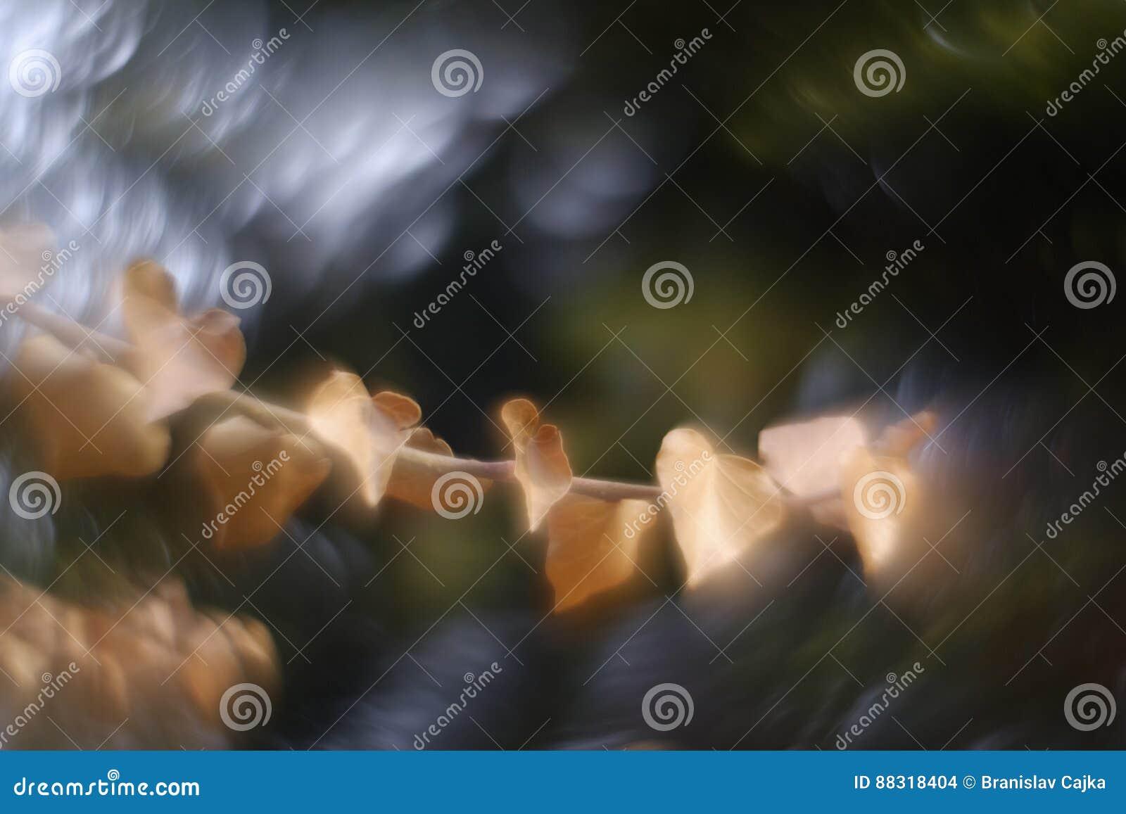 Swirly-bokeh