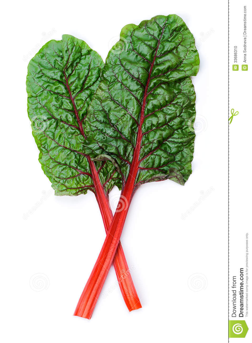Swiss Chard Stock Photo Image Of Food Fresh Bundle 33686310