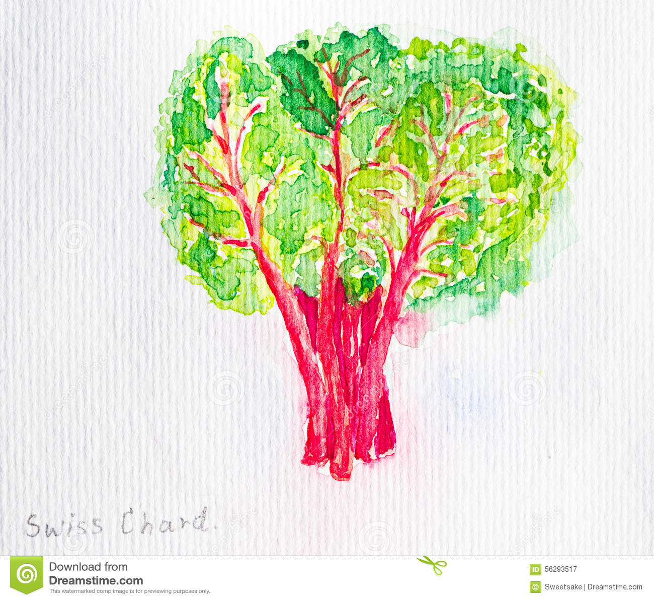 Swiss Chard Stock Illustrations 126 Swiss Chard Stock Illustrations Vectors Clipart Dreamstime