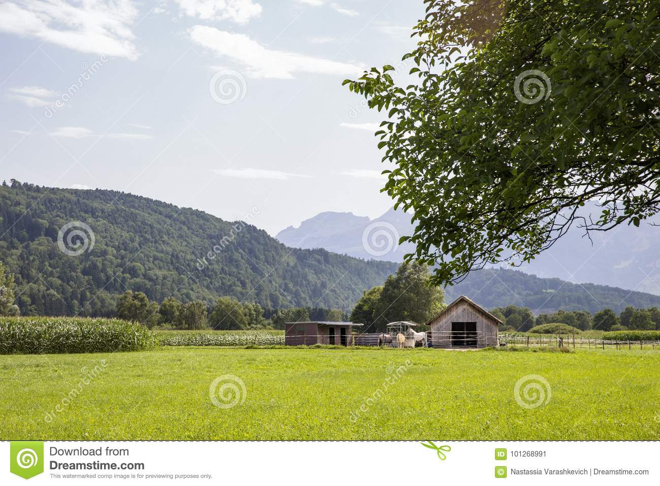Horse Stable Stock Image Image Of Branches Plants 101268991