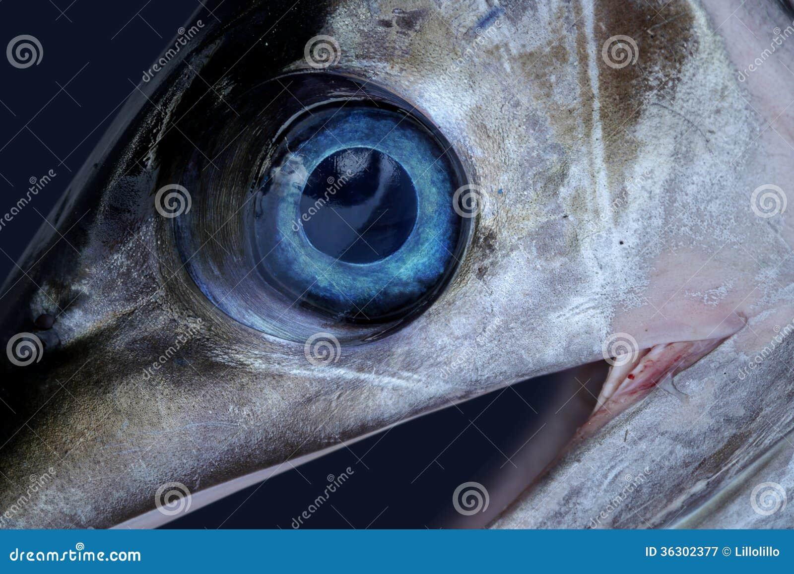 Sword Fish Eye Royalty Free Stock Photography - Image: 36302377