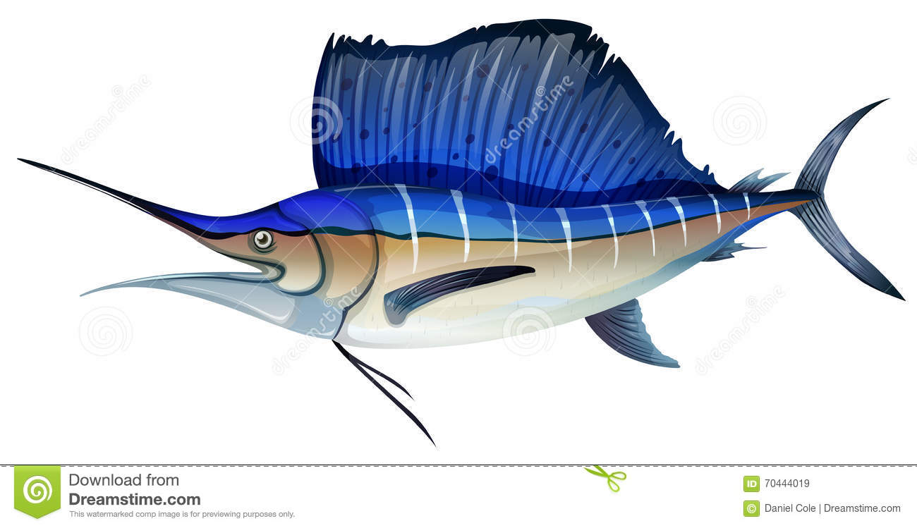 Swordfish Cartoons  Illustrations  U0026 Vector Stock Images