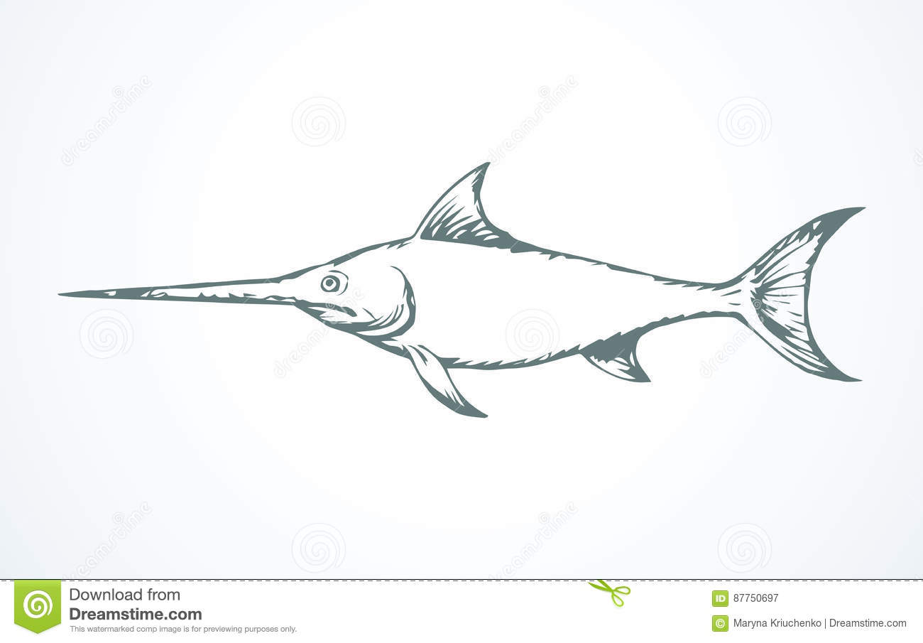 Uncategorized Swordfish Drawing swordfish vector drawing stock image 87750697 royalty free vector
