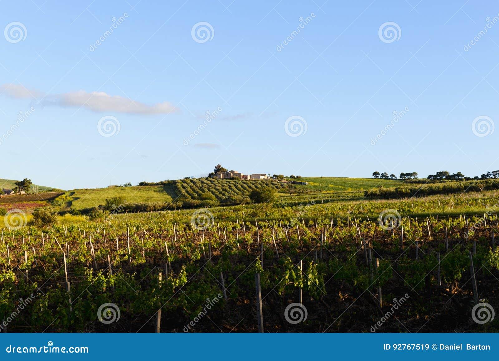 Sycylijski winnica