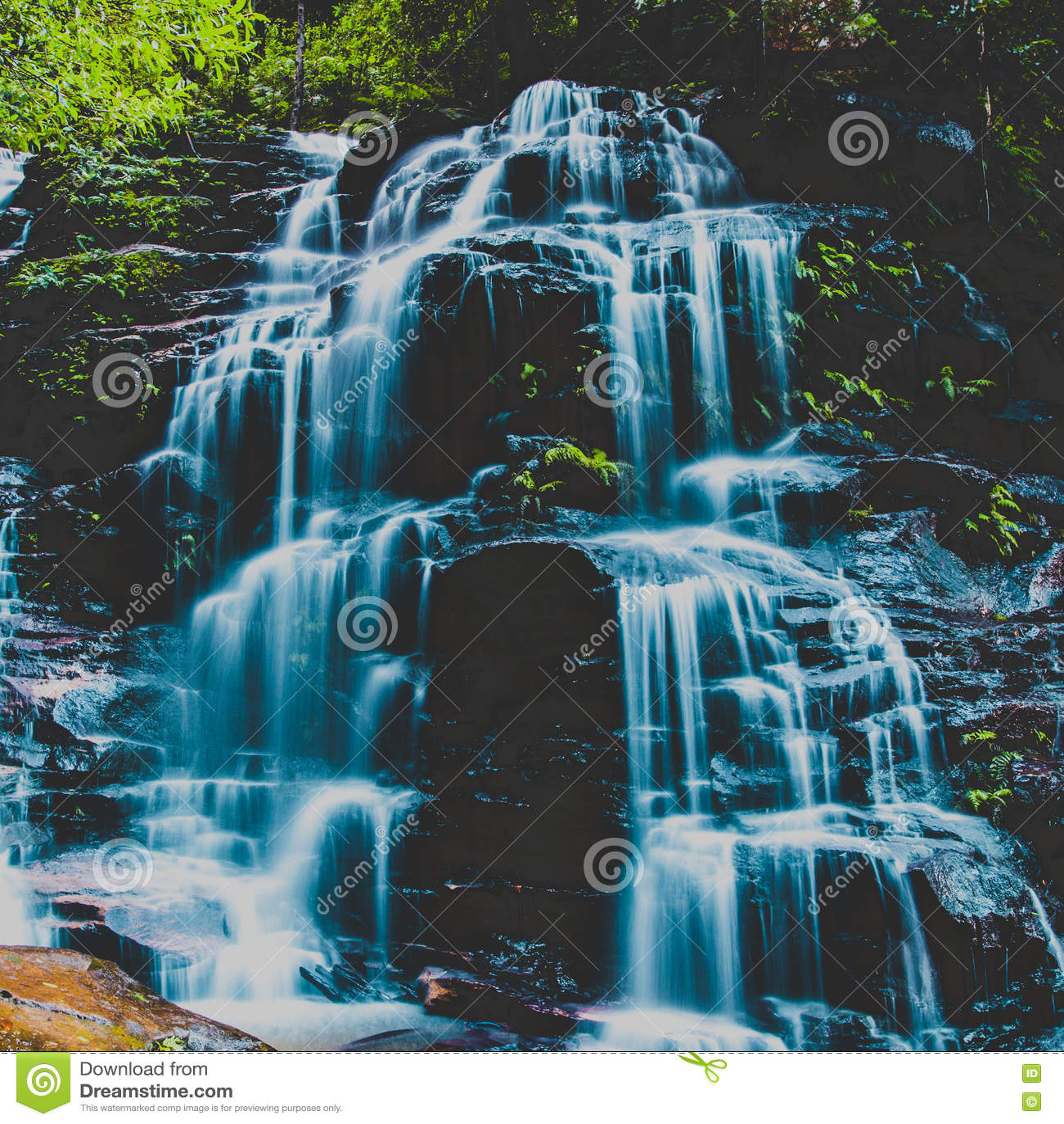 Sylvia Falls, montagnes bleues, Australie