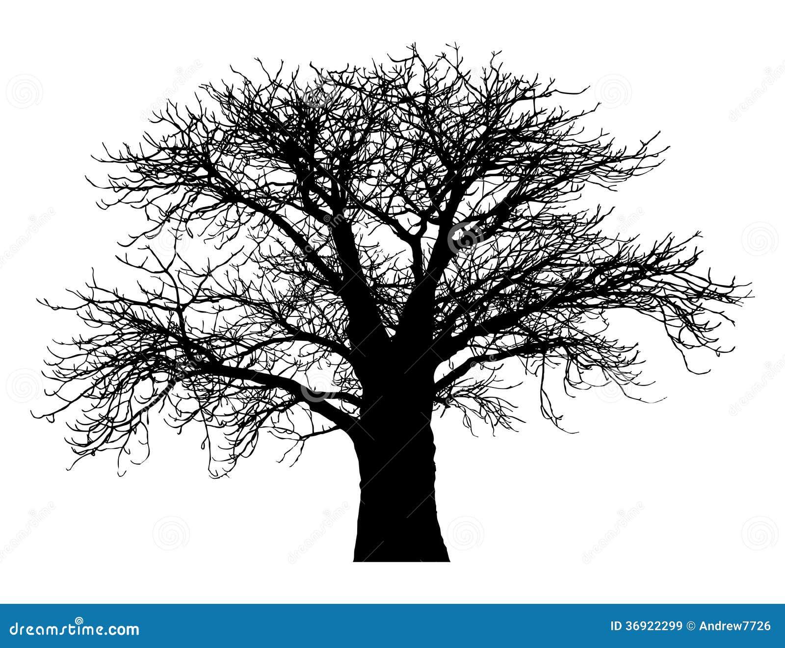 Sylwetka baobabu drzewo