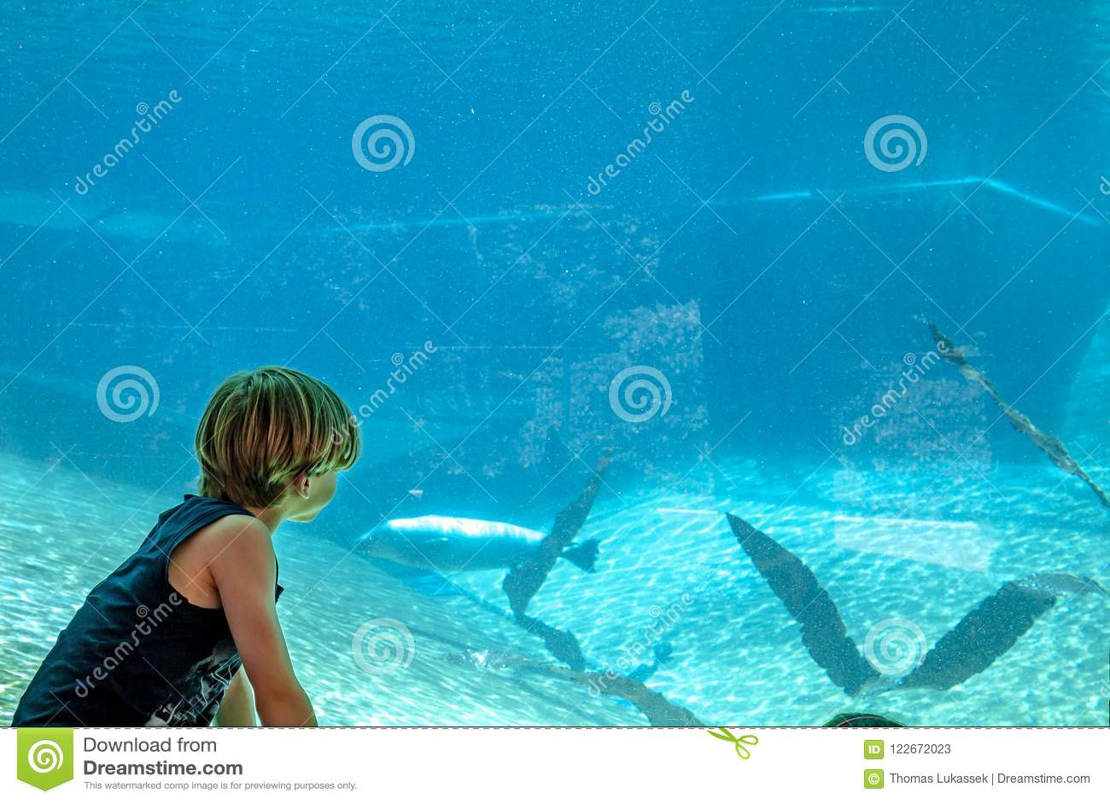 Sylwetka chłopiec patrzeje aeal w akwarium