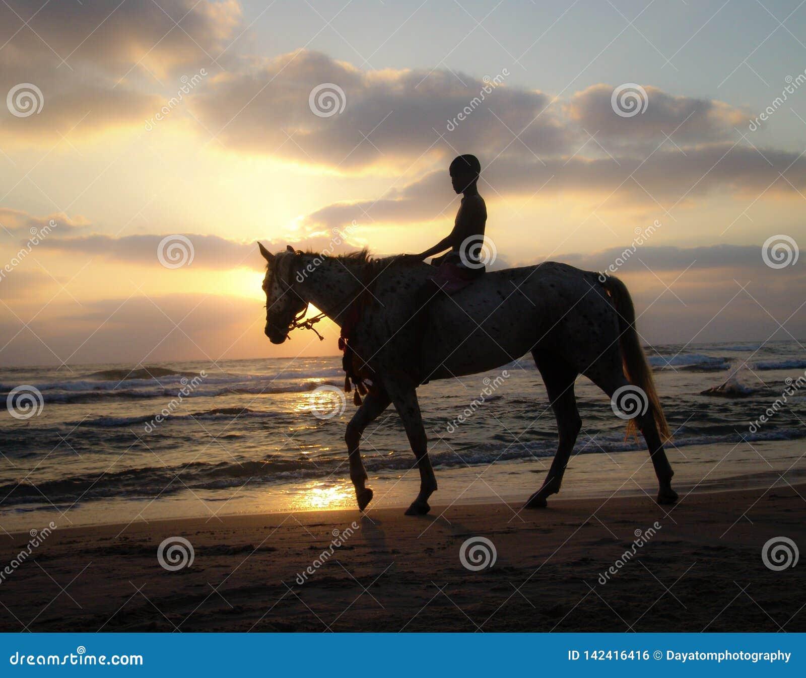 Sylwetka młoda chłopiec jedzie konia przy zmierzchem na piaskowatej plaży pod chmurnym ciepłym niebem