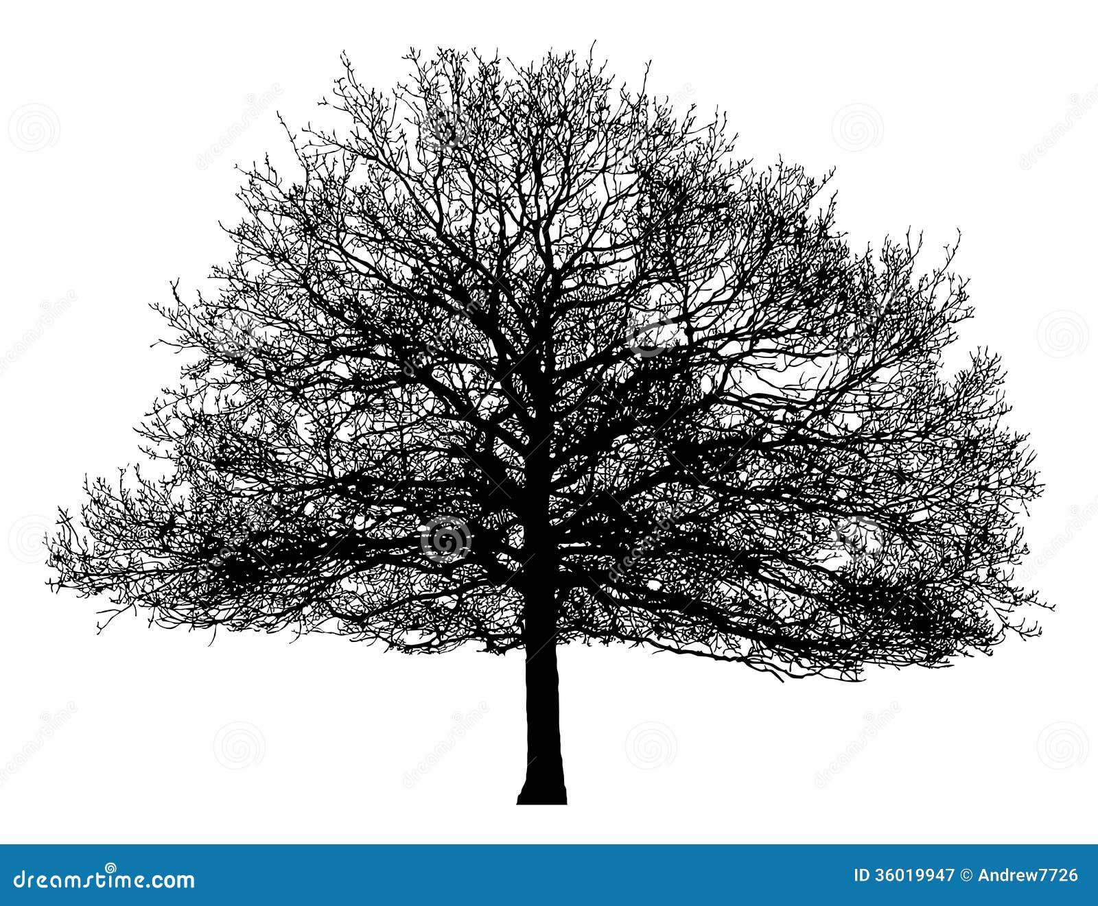 Sylwetka samotny drzewo