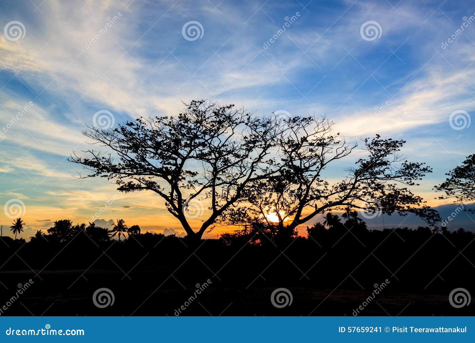 Sylwetka zmierzch w ogródzie i drzewo