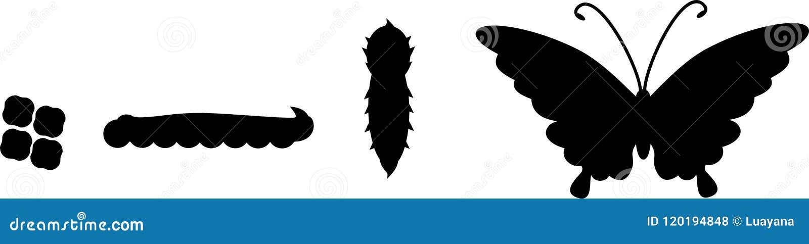 Sylwetki cztery sceny motyli rozwój
