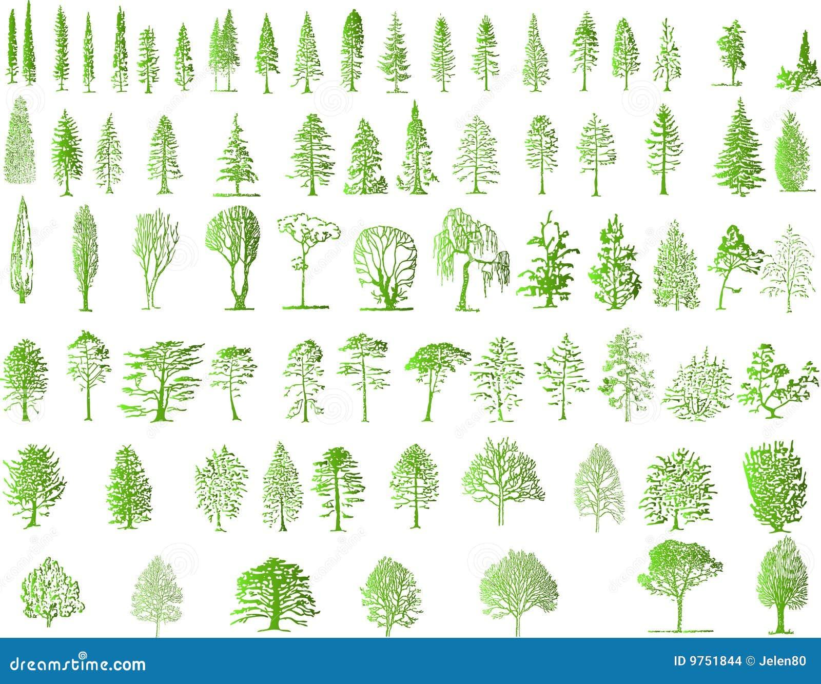 Sylwetki drzewne