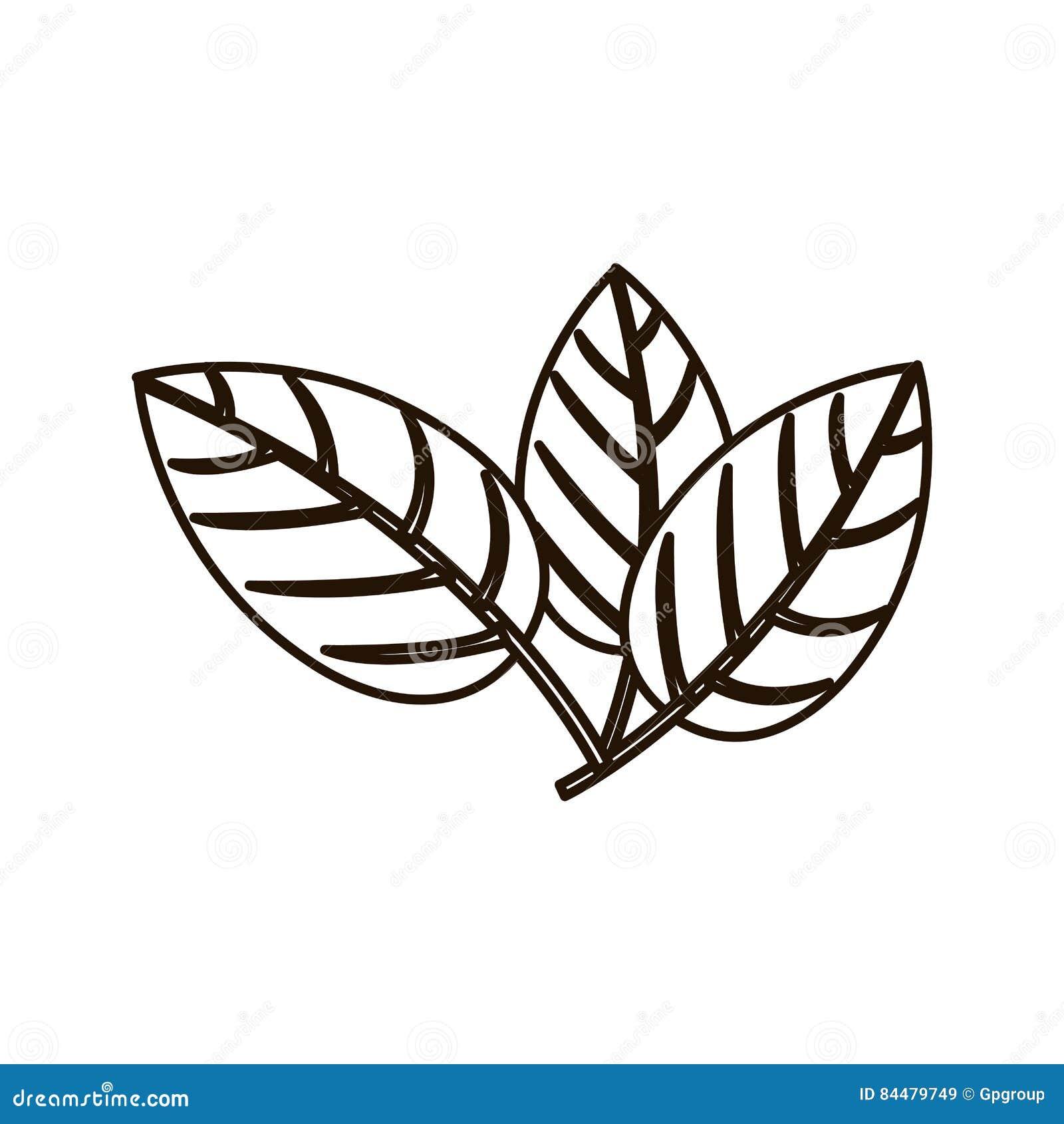 Sylwetki trzy liście z rozgałęzieniami