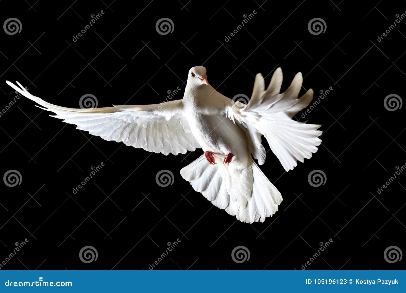 Symbol Of Freedom White Doves Flying On A Black Background Stock