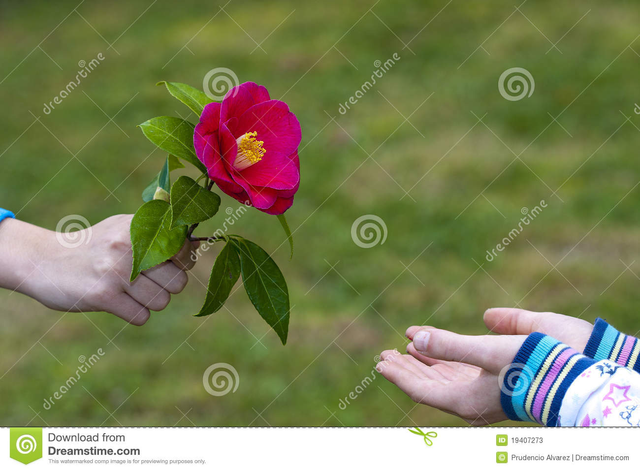 Symbol Of Friendship And Love Stock Image Image Of Park Flowers