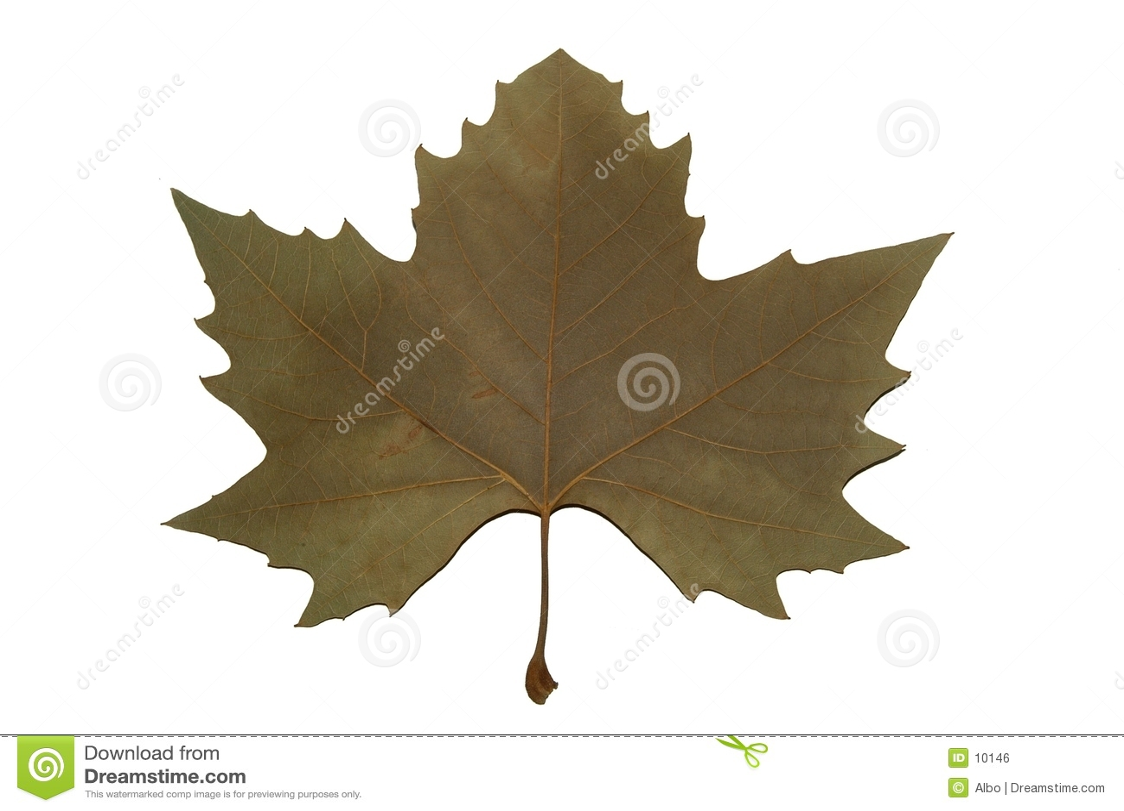Symbol kanady