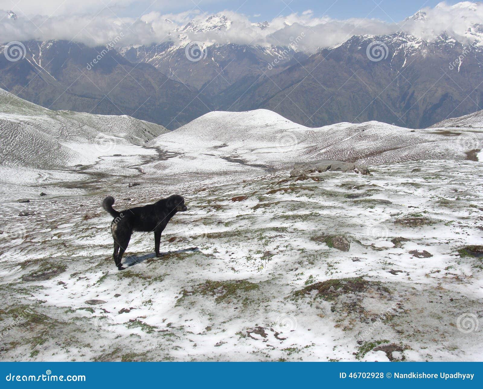 The Symbol Of Loyalty Stock Photo Image Of Loyalty Himalaya 46702928