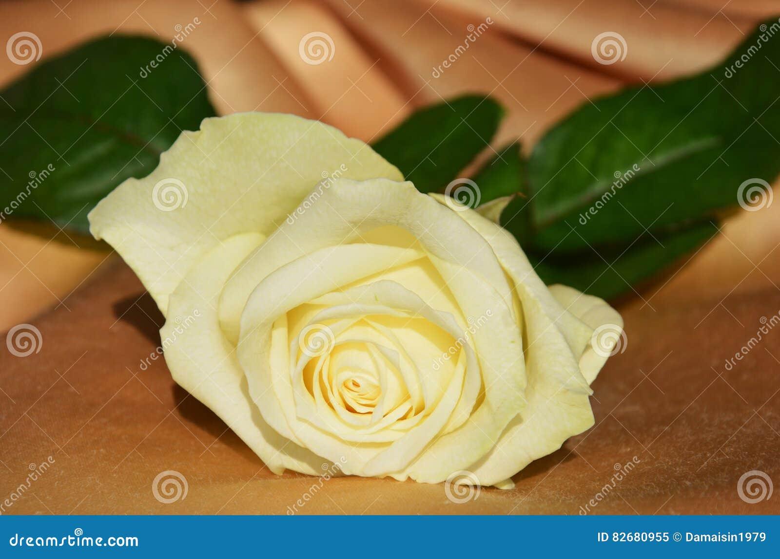 Symbol Of Purity Stock Image Image Of White Love Elegance 82680955