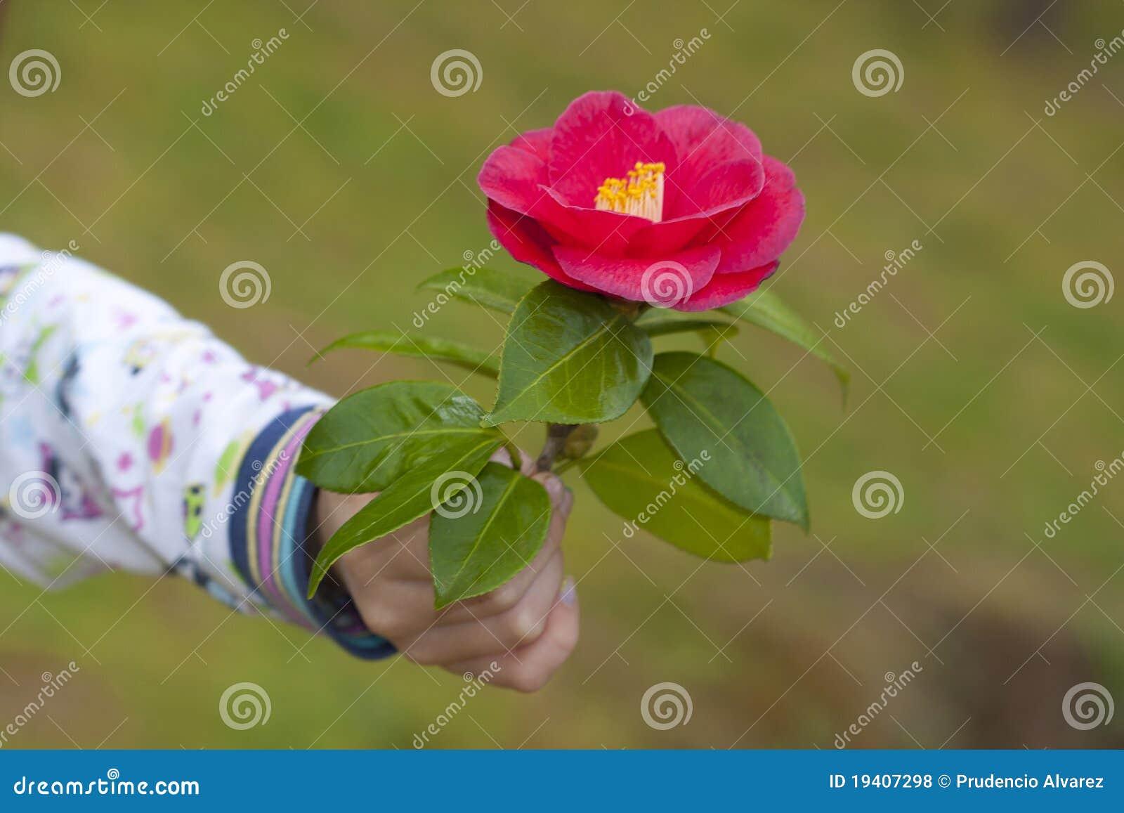 Symbole de l 39 amiti et de l 39 amour photos libres de droits image 19407298 - Symbole de l orchidee ...