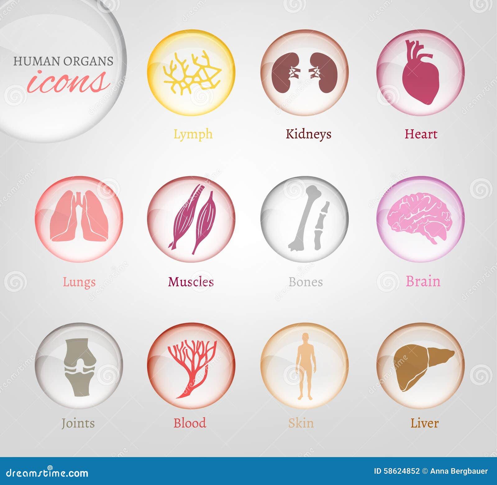 Symboler för mänskliga organ