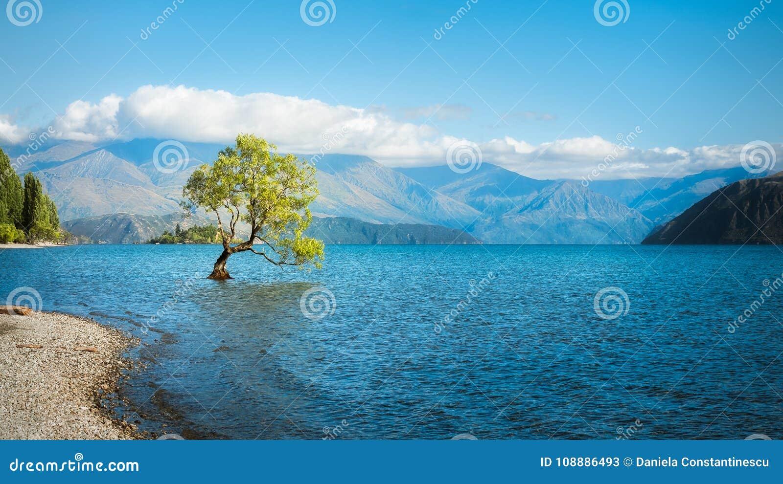 A Symbolic Willow Tree at Lake Wanaka.