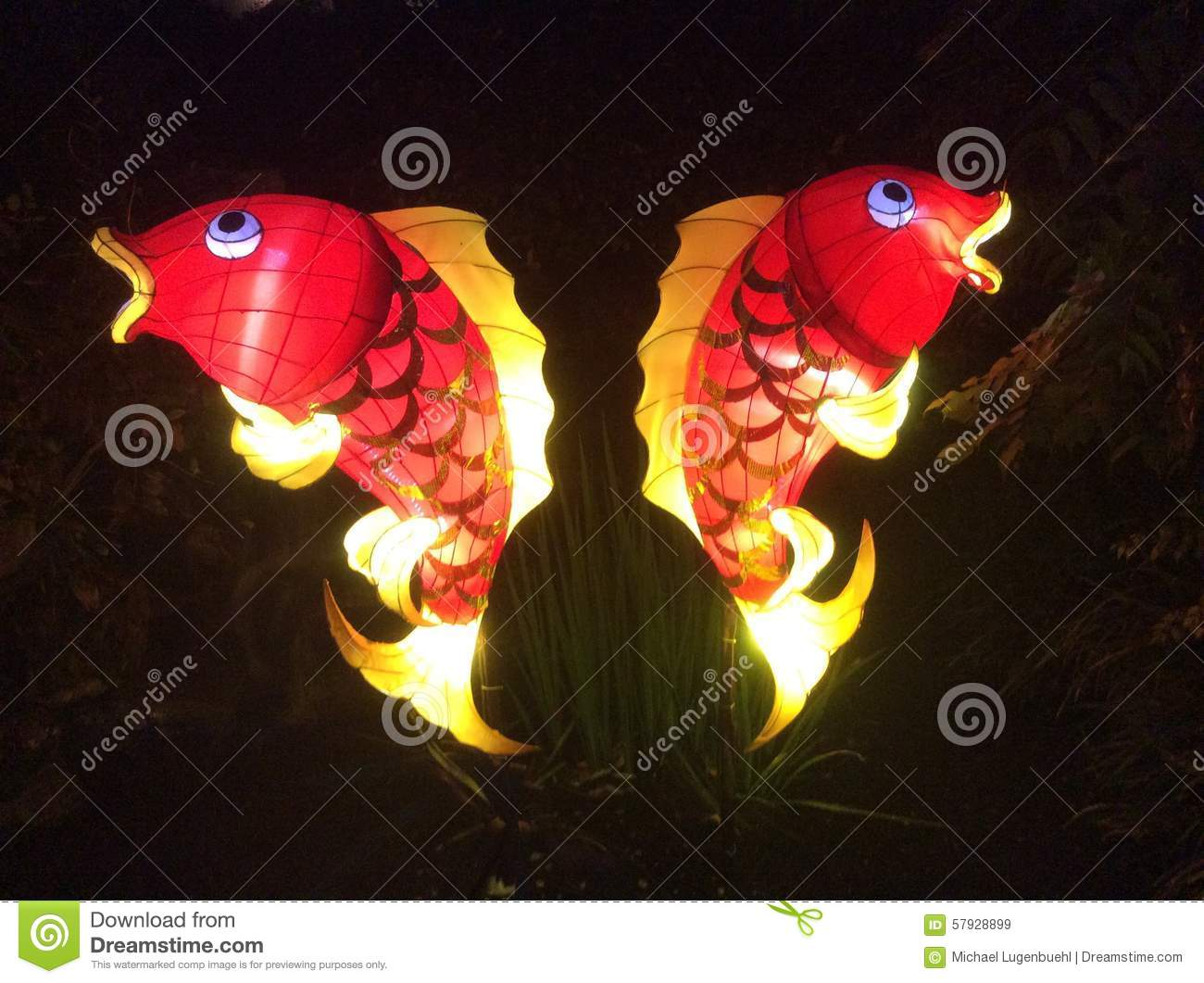 symmetrical red coi fish lantern stock photo image 57928899 angelfish clipart Angelfish Outline