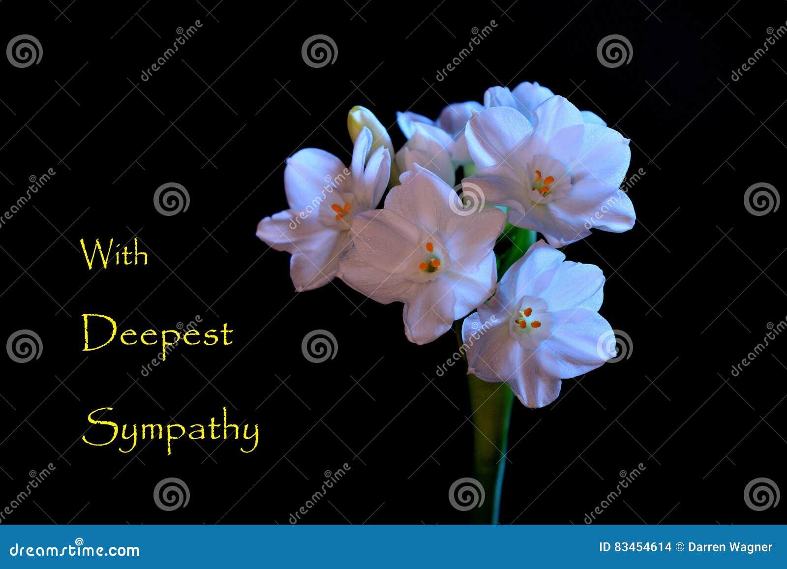 download sympathy card stock photo image of background condolences 83454614